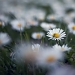 Proljetni đir srijedom ~ Slika 304536