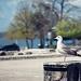 Proljetni đir srijedom ~ Slika 304542