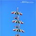 Akrobatska skupina Frecce Tricolori iznad Zadra ~ Slika 304608