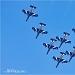 Akrobatska skupina Frecce Tricolori iznad Zadra ~ Slika 304632