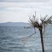 Drvored palih tamarisa na Puntamici ~ Slika 305891
