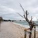 Drvored palih tamarisa na Puntamici ~ Slika 305892