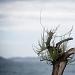 Drvored palih tamarisa na Puntamici ~ Slika 305893