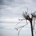 Drvored palih tamarisa na Puntamici ~ Slika 305894
