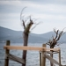 Drvored palih tamarisa na Puntamici ~ Slika 305896