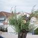 Drvored palih tamarisa na Puntamici ~ Slika 305897