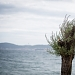 Drvored palih tamarisa na Puntamici ~ Slika 305898