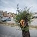 Drvored palih tamarisa na Puntamici ~ Slika 305899