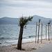 Drvored palih tamarisa na Puntamici ~ Slika 305900