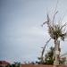 Drvored palih tamarisa na Puntamici ~ Slika 305903