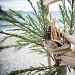 Drvored palih tamarisa na Puntamici ~ Slika 305906