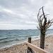 Drvored palih tamarisa na Puntamici ~ Slika 305909