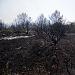 Požar kod deponija Diklo ~ Slika 313147