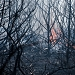 Požar kod deponija Diklo ~ Slika 313148