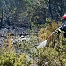 Požar kod deponija Diklo ~ Slika 313156