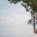 Rezidbom stabala započela nova faza radova u Tuđmanovoj ~ Slika 313387