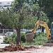 Rezidbom stabala započela nova faza radova u Tuđmanovoj ~ Slika 313388