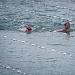 """Županijsko prvenstvo u plivanju """"Ljeto 2021"""" ~ Slika 313553"""