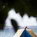 Ljeto na Kolovarama ~ Slika 314150
